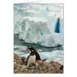 Tarjeta de la familia del pingüino de Gentoo