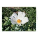 Tarjeta de la flor blanca
