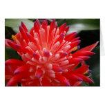Tarjeta de la flor de Bromeliad
