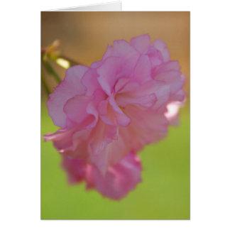 Tarjeta de la flor de cerezo