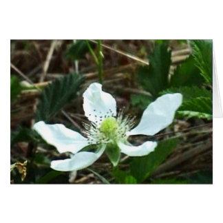 Tarjeta de la flor de la mora ártica