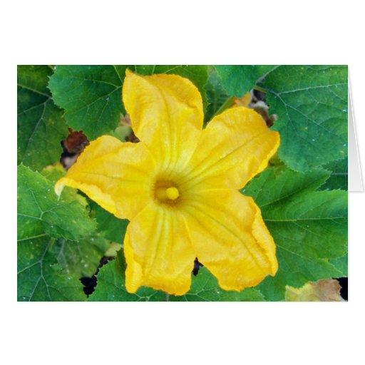 Tarjeta de la flor del calabacín