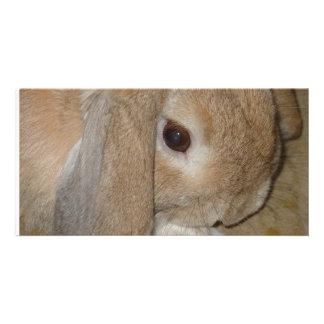 Tarjeta de la foto - conejo enano espigado del Lop Tarjeta Fotográfica