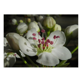 Tarjeta de la foto del ATC del flor de la pera de  Tarjetas De Visita
