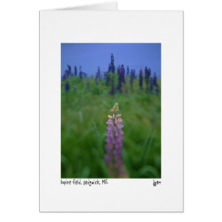 tarjeta de la foto del campo del lupine