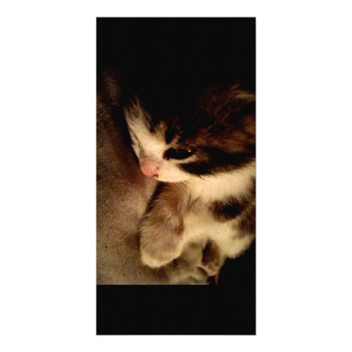 Tarjeta de la foto del contraste del gatito tarjetas fotográficas personalizadas