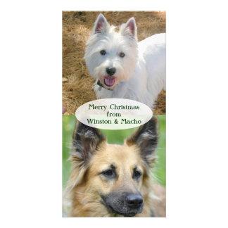 Tarjeta de la foto del navidad de los perros tarjeta fotográfica