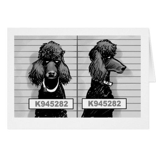 Tarjeta de la fotografía de detenido del perro
