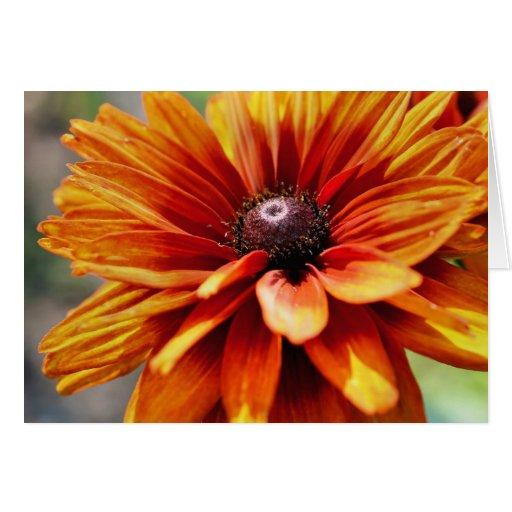 Tarjeta de la fotografía de la flor de la margarit