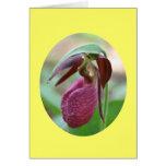 Tarjeta de la fotografía de la flor de la orquídea