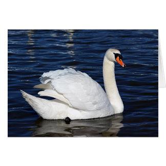 Tarjeta de la fotografía del cisne - esconda todas