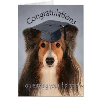 Tarjeta de la graduación de Sheltie
