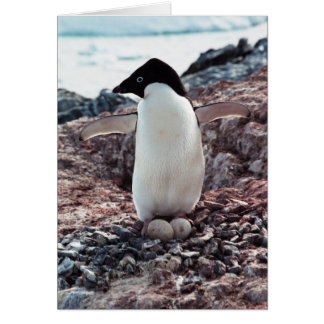 Tarjeta de la jerarquía del pingüino de Adelie