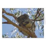 Tarjeta de la koala el dormir