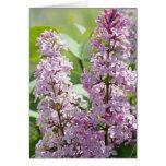 Tarjeta de la lila P5390