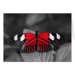 Tarjeta de la mariposa