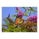 Tarjeta de la mariposa de la lila