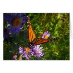 Tarjeta de la mariposa de monarca