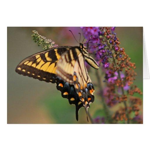 Tarjeta de la mariposa de Swallowtail 5x7 del tigr