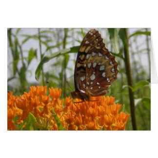Tarjeta de la mariposa (espacio en blanco encendid