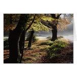 Tarjeta de la niebla del otoño