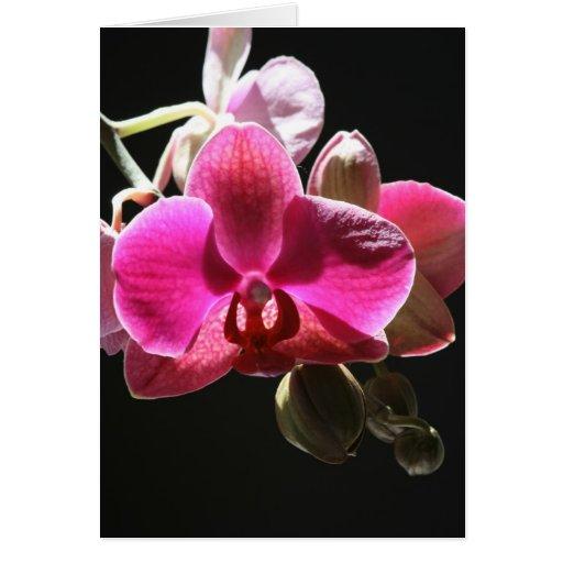 Tarjeta de la orquídea
