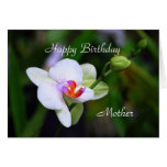 Tarjeta de la orquídea del Phalaenopsis de la madr