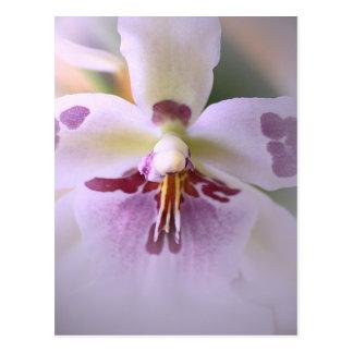 Tarjeta de la orquídea del primer tarjeta postal