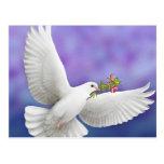 Tarjeta de la paloma de la paz del vuelo tarjetas postales