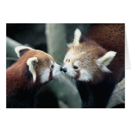 Tarjeta de la panda roja #2-Greeting