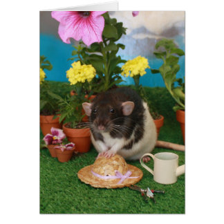 Tarjeta de la rata de la primavera