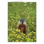 Tarjeta de la regla de Groundhogs