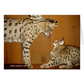 Tarjeta de la reunión del gato de la sabana