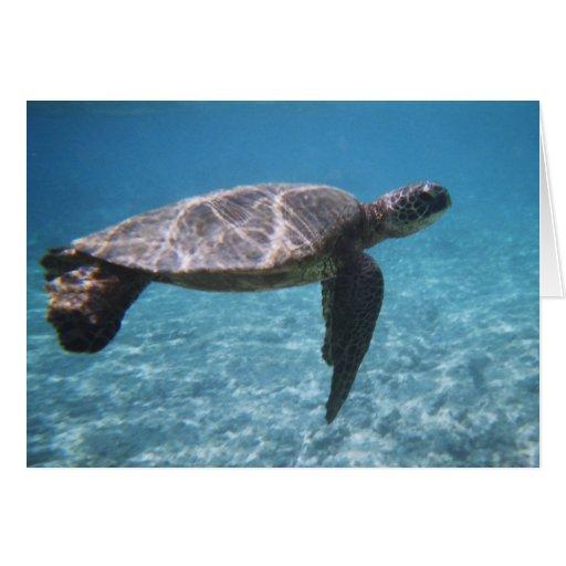 Tarjeta de la tortuga de mar verde
