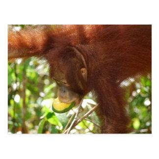 Tarjeta de las comidas campestres de la selva postal