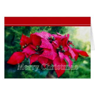 Tarjeta de las Felices Navidad del Poinsettia