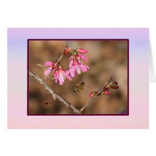 Tarjeta de las flores de cerezo
