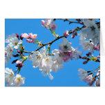 Tarjeta de las flores de cerezo de la primavera