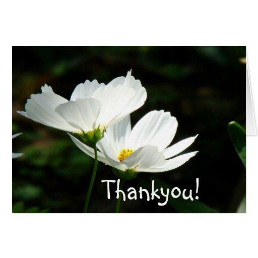 Tarjeta de las flores de las amapolas blancas