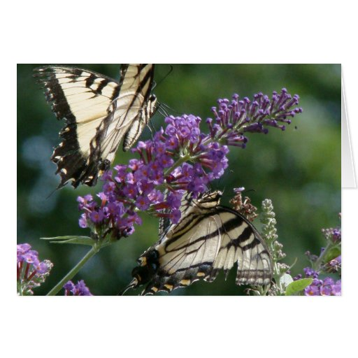 Tarjeta de las flores de mariposas