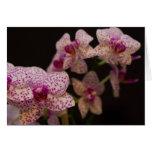 tarjeta de las orquídeas