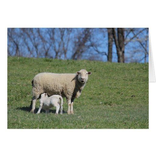 Tarjeta de las ovejas de la mamá y del bebé