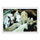 Tarjeta de los bebés de la vaca
