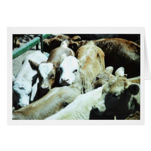 Tarjeta de los bebés de la vaca - modificada para