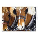 Tarjeta de los caballos de proyecto de Clydesdale