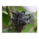 Tarjeta de los colibríes tarjetas postales
