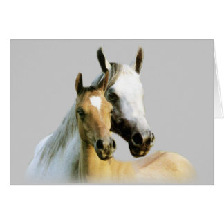 Tarjeta de los compinches del caballo