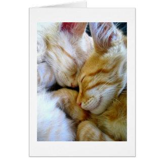 Tarjeta de los gatitos del Snuggle
