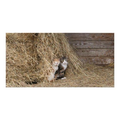 Tarjeta de los gatos del granero tarjetas fotograficas