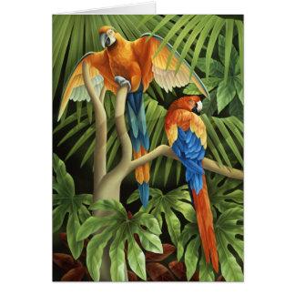 Tarjeta de los Macaws